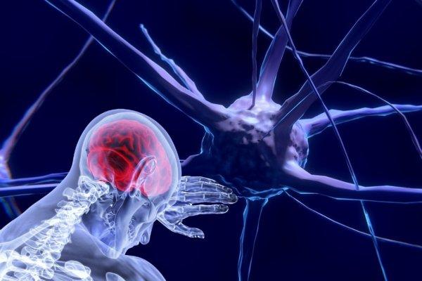 Нейробиологи из США нашли средство для «выключения» боли в мозге
