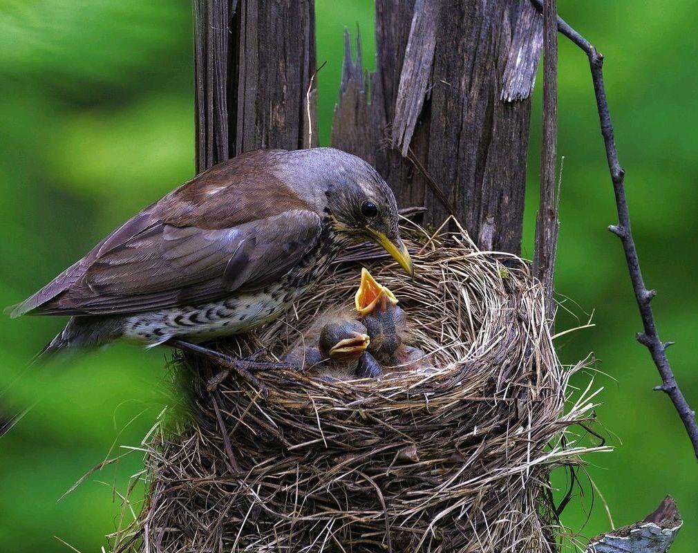 Родительская опека и долгое детство сделали птиц умнее