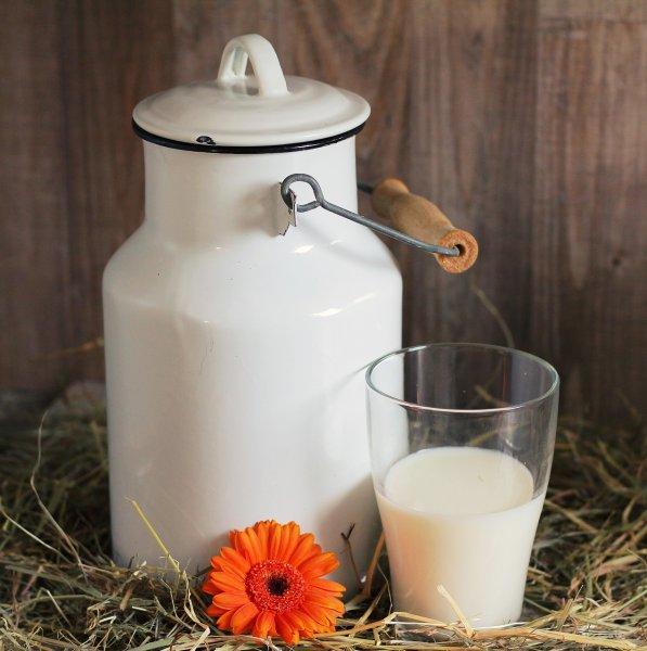 Парное молоко может содержать устойчивые к антибиотикам бактерии