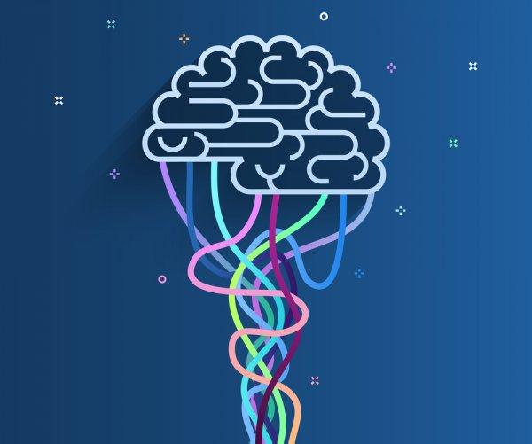 Избыток длинных интронов – причина «быстрой эволюции» мозга