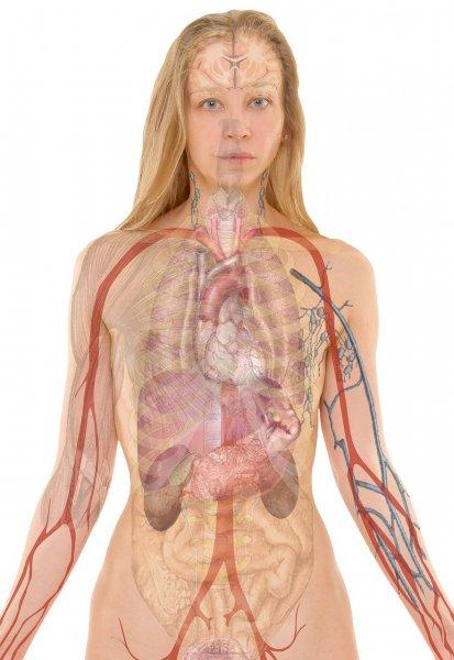 Российские учёные учат нейросеть выращивать искусственные органы