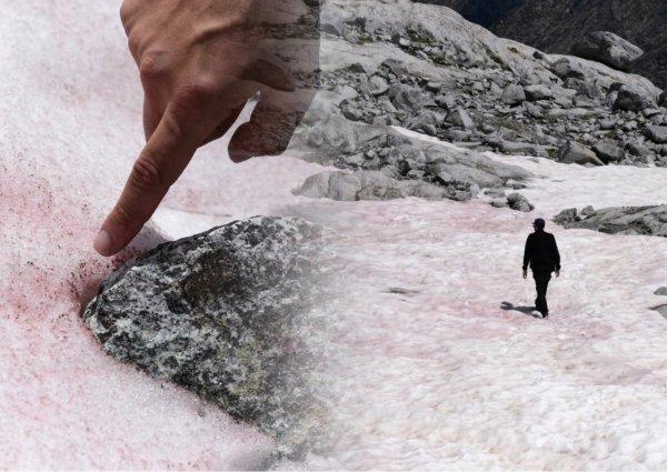 На льду в итальянских Альпах появились розовые водоросли